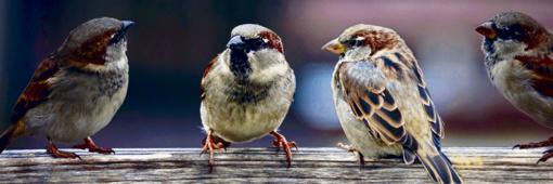 Paukščių kalba