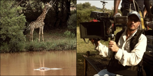 Pietų Afrikoje žirafa užmušė kino kūrėją