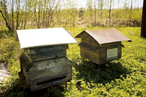 Gelbėjimosi ratas bitėms, žemdirbiams – nė šiaudo