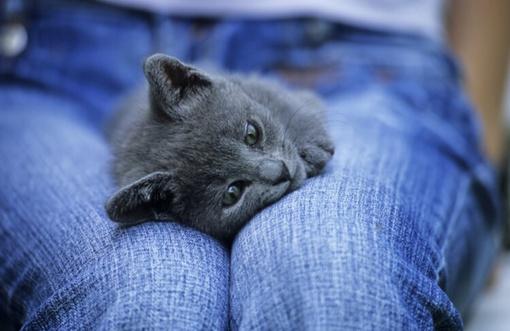 Dilema: kas turi atlyginti namų tvarkytojų ar gyvūnėlių prižiūrėtojų padarytą žalą?