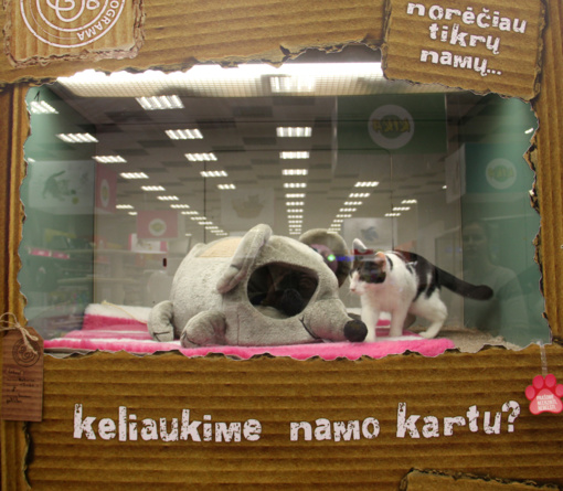 Lietuvių širdys minkštėja – vis daugiau beglobių gyvūnų randa namus