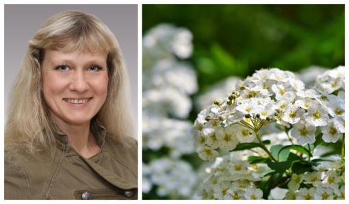 Augalinė terapija – natūrali ir moksliškai ištirta