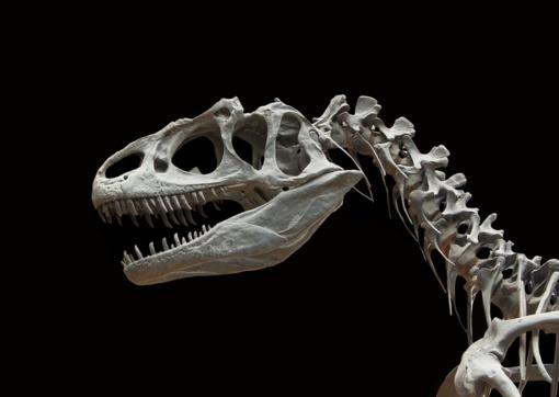 Paryžiuje už 2 mln. eurų parduotas itin retas dinozauro skeletas