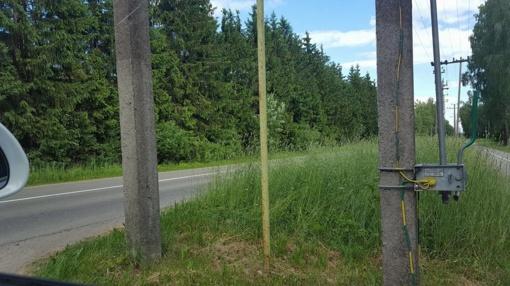 Nepjaunama žolė - grėsmė vairuotojų saugumui?