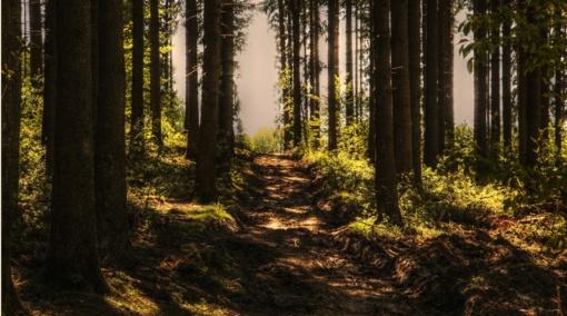 Privačių miškų savininkams – nemokami nuotoliniai mokymai