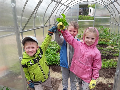 Daržovių auginimas šiltnamyje – nauja pažintis su augalais