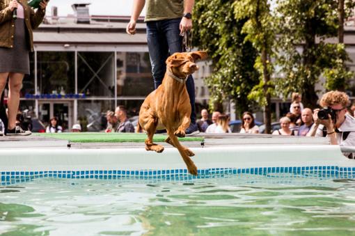 Paaiškėjo pirmojo Lietuvoje šunų šuolių į vandenį turnyro nugalėtojai (nuotraukų galerija)