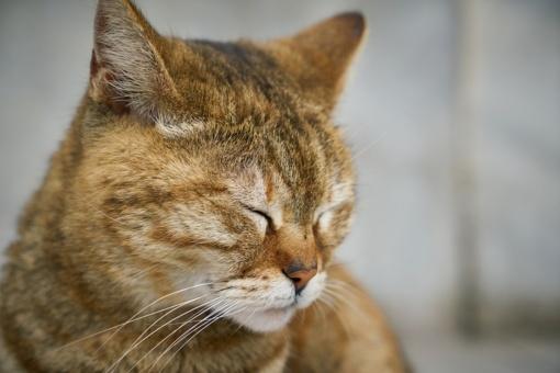 Elektrėnuose vyras negyvai sutrypė katiną
