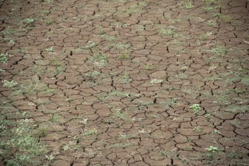 Biotechnologai: nuostoliai būtų mažesni, jei šalies ūkininkai pasiruoštų iš anksto