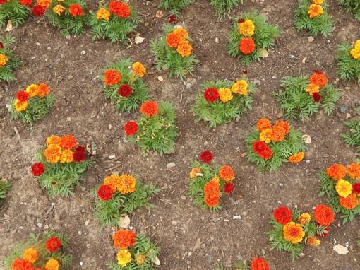 Dėkoja gėlių vagį sulaikiusiems pareigūnams