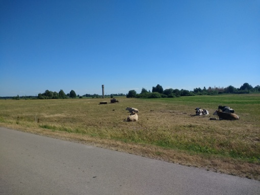 Gamta ūkininkams negailestinga – sausra naikina derlių