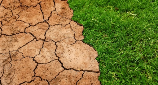Kretingos rajone skelbiama ekstremalioji situacija dėl stichinės sausros