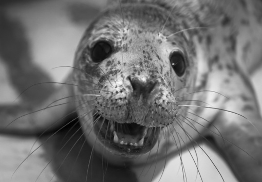"""L. Balsys: pilkųjų ruonių žūčių klausimą padės spręsti """"Sea Shepherd"""" atstovai (fotogalerija)"""