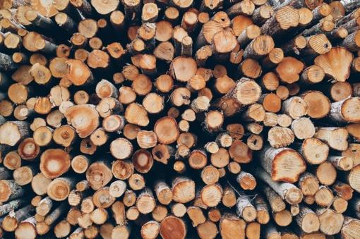 Šiemet už parduotą medieną valstybė gavo daugiau pajamų