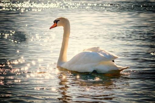 Ištirta Zarasų rajono maudyklų vandens kokybė