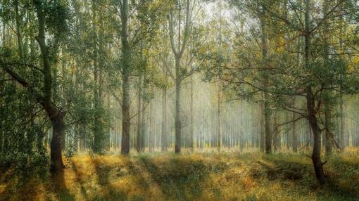 Valstybinių miškų urėdija Turto bankui perdavė 115 turto objektų