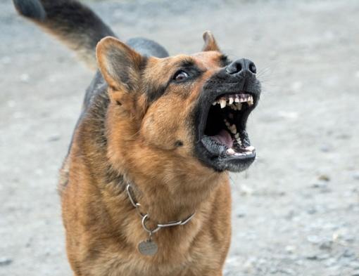 Sulaikant smurtautoją policijos pareigūną apkandžiojo šuo