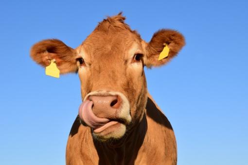 Viceministrė: sieksime, kad gyvūnų ženklinimo paslaugų teikėjų ratas būtų praplėstas