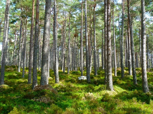 Atšaukiamas apribojimas lankytis Jonavos rajono miškuose