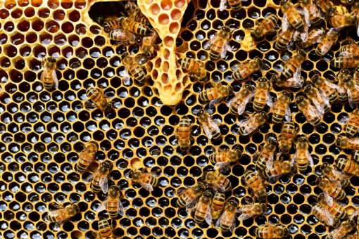 EK uždraudė Lietuvai ir Rumunijai naudoti bites naikinantį pesticidą