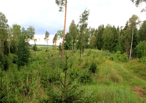 Plunksnuočių miškas – gamtos turtų, žmogaus veiklos ir tragiškos istorijos žinynas