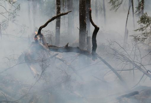 Gaisrų bangą Švedijoje nulėmė miškų ūkio politika, sako aplinkosaugininkai