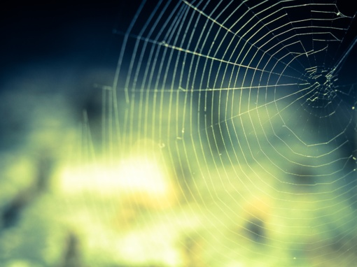 Rygoje paskleista melaginga žinia apie pavojingų vorų invaziją