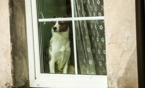 Kretingos rajone – žiauri šuns egzekucija