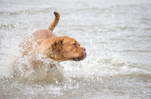 Dėl maudyklų zonų, skirtų lankytis su gyvūnais