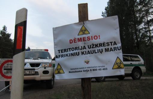 Kupiškio rajonas paskelbtas afrikiniu kiaulių maru užkrėsta teritorija