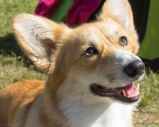 Veterinarijos gydytojai pataria, kaip per karščius pasirūpinti šunimis