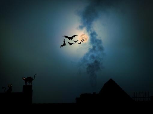 Tarptautinė šikšnosparnių naktis Kuršių nerijoje