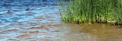 Šiemet tarša neužfiksuota Tauragės ir Telšių apskričių vandens telkiniuose