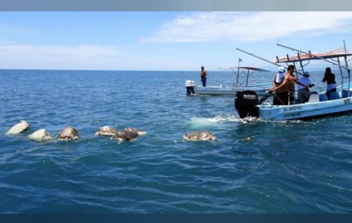 Meksikos paplūdimyje rasta 300 negyvų nykstančių vėžlių