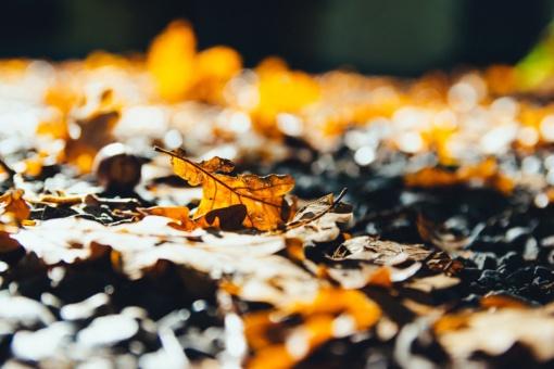 Orai: savaitei baigiantis ruduo subjurs dar labiau