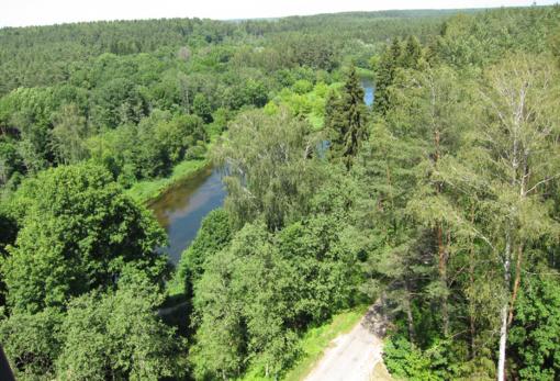 Labanoro girioje stabdomi miško kirtimai