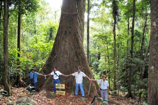 Kviečia gelbėti Lietuvos miškus