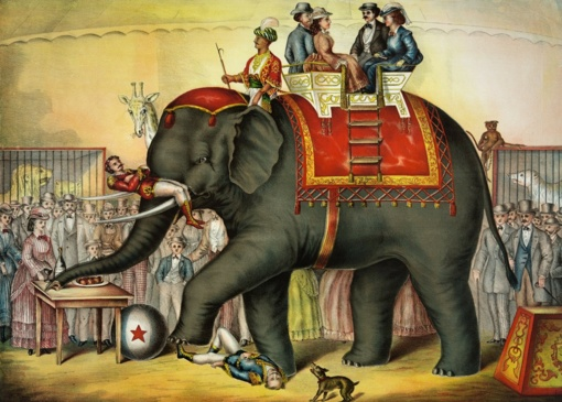 Seimo komitete bus svarstomas draudimas naudoti laukinius gyvūnus cirkuose