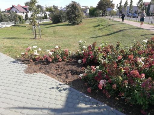 Vagiamiausios gėlės Alytuje - ne baltosios rožės
