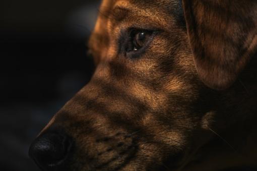 Iš Jurbarko rajono gyventojo pavogti šunys