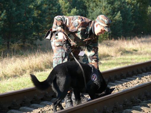 Tarnybiniai šunys demonstruos gebėjimus narkotikų, sprogmenų bei ginklų paieškos čempionate