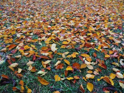 Orai: savaitei įpusėjus – niūros permainos, tačiau neilgam