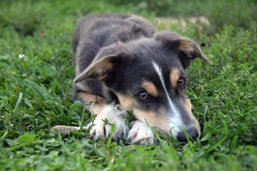 Žiaurus elgesys: kieme nušovė šunį