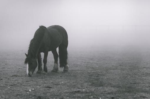 Lazdijų rajone automobilis susidūrė su arkliu