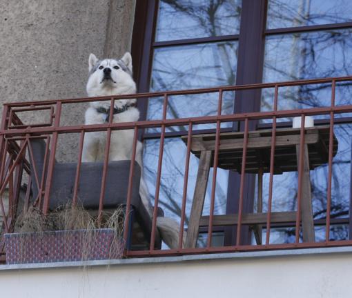 Ilgieji savaitgaliai – darbymetis vagims: juos atbaidyti gali akyli kaimynai, lojantys šunys