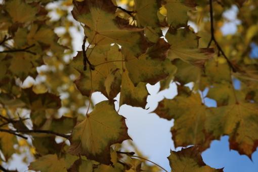 Vilniuje ir Varėnoje pagerinti lapkričio 4-osios temperatūros rekordai