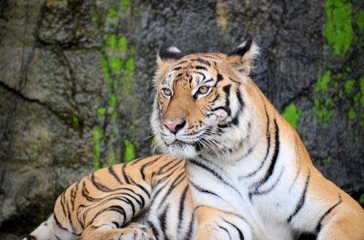 Ruošiantis Zoologijos sodo rekonstrukcijos projektų keitimui, suplanuota daugiau gyvūnų