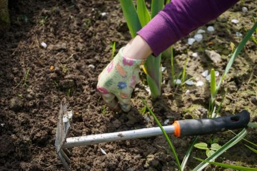 Įstatymo pataisomis siekiama sureguliuoti sodininkų veiklą