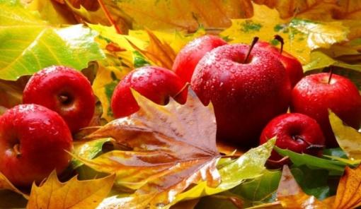 Kad rudenėlis stebintų gražiomis spalvomis, o ne ligomis