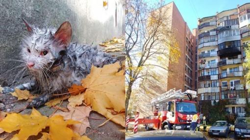 Jautrūs ugniagesiai gaivino iš liepsnų išgelbėtą katinėlį